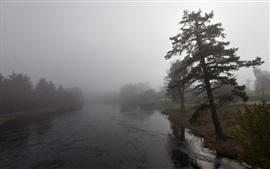 아침, 나무, 강, 안개