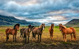 Preview wallpaper Mountains, clouds, five horses
