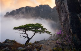Preview wallpaper Mountains, pine tree, fog, flowers, morning