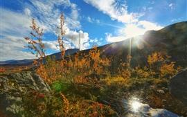 Mountains, trees, creek, sun, blue sky, white clouds, autumn