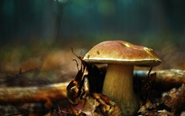 Preview wallpaper Mushroom, leaves