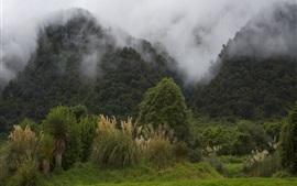 Nova Zelândia, montanhas, névoa, manhã, paisagem natural