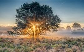 Nijverdal, Holanda, manhã, árvore, grama, raios solares
