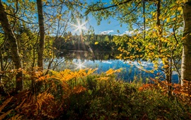 Preview wallpaper Norway, trees, lake, fern, autumn, sun rays