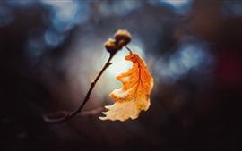 Uma fotografia macro de folhas amarelas, outono