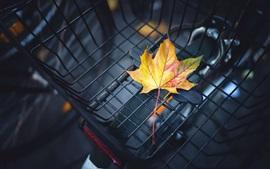 One yellow maple leaf, bike basket