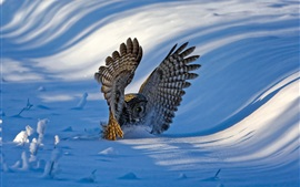 Owl, wings, snow