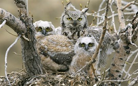 Preview wallpaper Owls family, tree