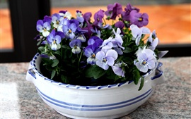 Preview wallpaper Pansies flowers, bowl