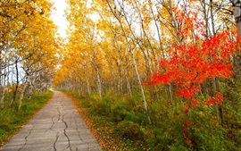 Preview wallpaper Park, birch, trees, path, yellow leaves, autumn