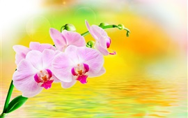 Preview wallpaper Phalaenopsis, flowers, water