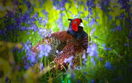 Preview wallpaper Pheasant, bird, flowers