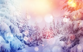 Preview wallpaper Pine trees, thick snow, winter, sunshine, glare