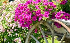 Petunias rosa, carrinho, jardim