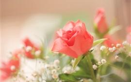 Розовая роза, нечеткий фон