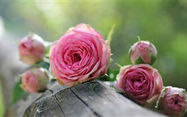 Preview wallpaper Pink roses, flowers, wood, bokeh