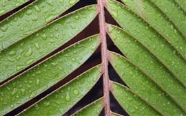 Plantas, hojas, gotas de agua