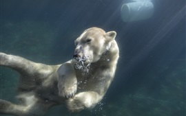 Preview wallpaper Polar bear swim underwater