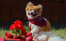 Puppy and red flowers