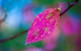 미리보기 배경 화면 자주색 잎, bokeh