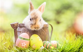 Preview wallpaper Rabbit, Easter eggs, grass, bokeh