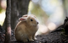 Rabbit in nature, bokeh