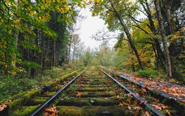 Preview wallpaper Railway, trees, moss, autumn