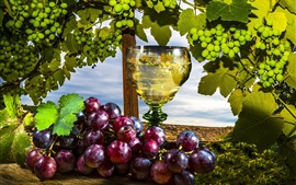 Red and green grapes, wine, fruit