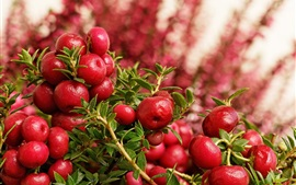 Preview wallpaper Red berries, blurry background