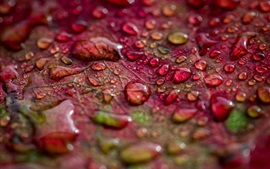 Red leaf, water drops, macro photography