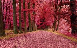 Красные листья лес, деревья, осень, путь
