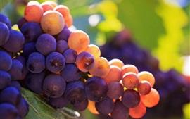 Uvas maduras, frutas frescas