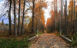 Road, trees, red leaves, autumn