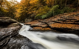 Preview wallpaper Rocks, stream, trees, autumn