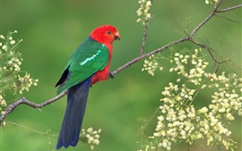 Preview wallpaper Royal parrot, wildlife, flowers, spring