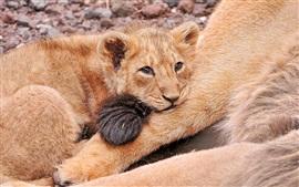 Filhote de leão da tristeza