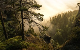 Preview wallpaper Saxon Switzerland National Park, trees, sun rays, Germany