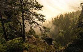 Национальный парк Саксонский Швейцария, деревья, солнечные лучи, Германия