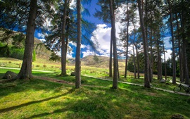 Preview wallpaper Scotland, grass, trees, clouds, nature scenery