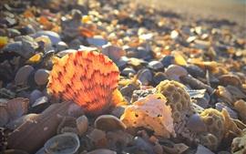 해안, 포탄, 햇빛