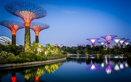 Cingapura, design de jardim, água, luzes, noite