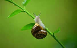 Preview wallpaper Snail, grass, stem