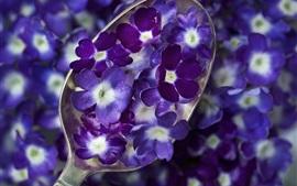 미리보기 배경 화면 숟가락, 푸른 보라색 꽃, 꽃잎