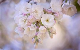 Весна, цветение, ветки, размытый фон