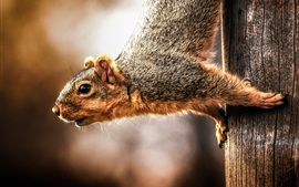 Squirrel climb down from tree