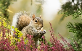 Preview wallpaper Squirrel, flowers, bokeh