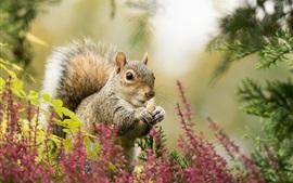 Esquilo, flores, bokeh