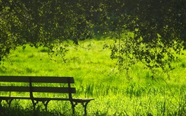 Verão, grama, verde, banco