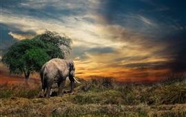 Таиланд, слон, трава, закат