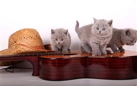 Aperçu fond d'écran Trois chatons gris jouent de la guitare